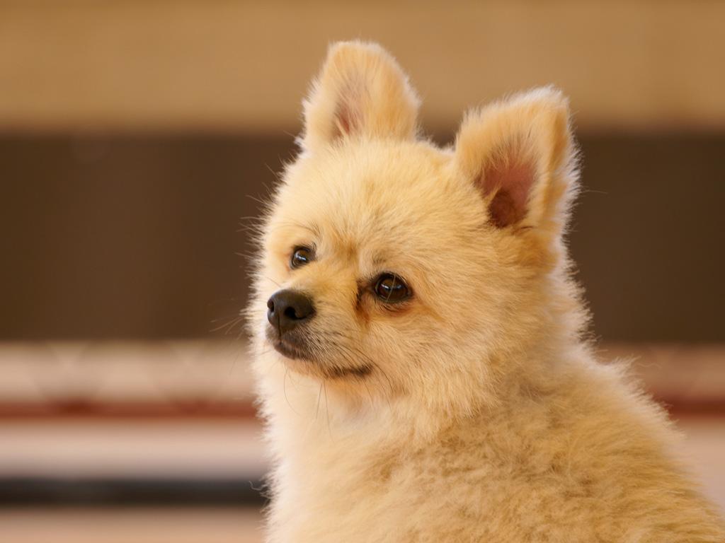 犬の画像 p1_28